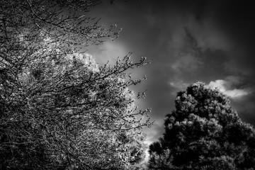 Infrared Trees and Skies