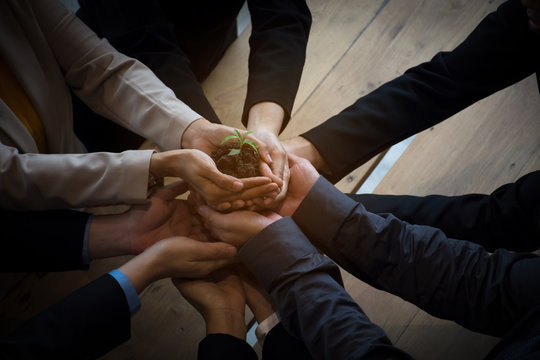team hand holding plant for growth up business project start up new project concept worker partner smart team.