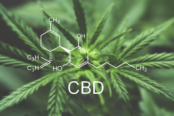CBD chemical formula Macro of a cannabis flower and marijuana macro