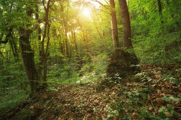 Deep forest nature