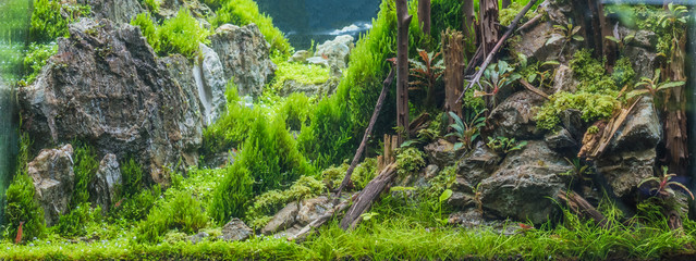 aquarium tank with a variety of aquatic plants.