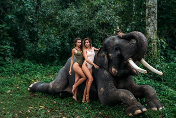 two young girls with curly hairs hugging each other, elephant on background near forest. Beautiful girl models with sporty body posing in white and green swimsuit. Concept of zoo, tropical photoshoot