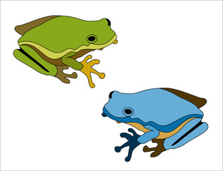 Cartoon big green frog on white background