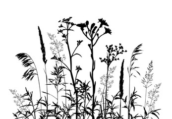Wild herbs and flowers silhouettes isolated on white.