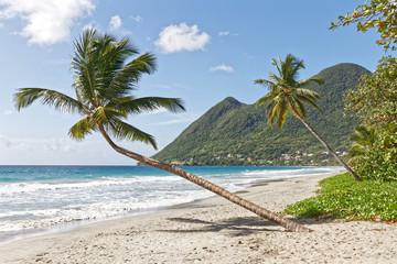Leaning coconut tree on Diamant beach - Martinique FWI