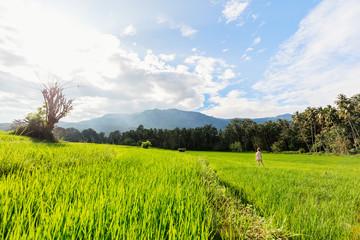 Adorable girl walking in rice field