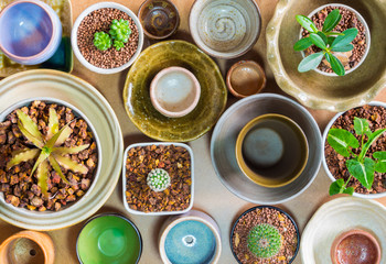 Ceramic bowls prepared to use for houseplant pot