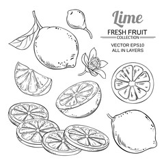 lime fruits vector set