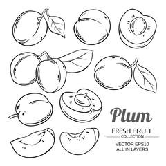 plum fruits  vector set