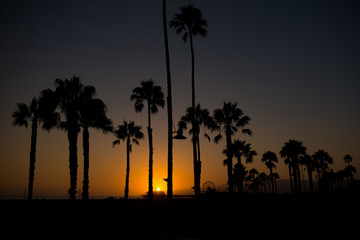 Santa Monica Beach sunset with palm tree silhuettes