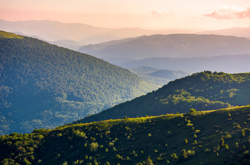 beautiful mountainous landscape on summer morning. forested hill lit by morning light. lovely nature background