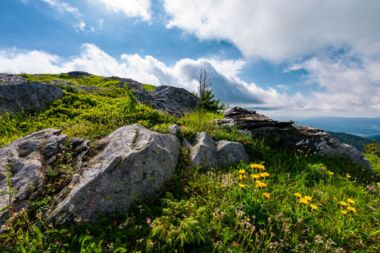 yellow dandelions in mountains. little flowers grow in severe environment. tough life concept. beautiful summer landscape on a cloudy day