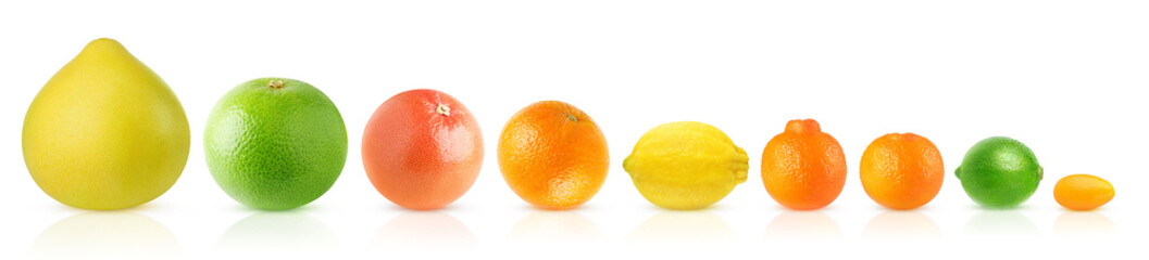 Isolated citrus fruits in a row. Pomelo, white and pink grapefruits, orange, lemon, clementine,...