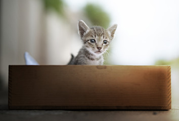 Cute tabby kittens  in wooden box