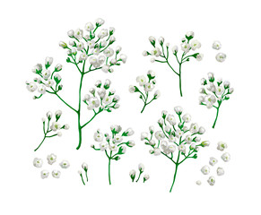Set collection of gypsophila flowers in watercolor style isolated on white background.