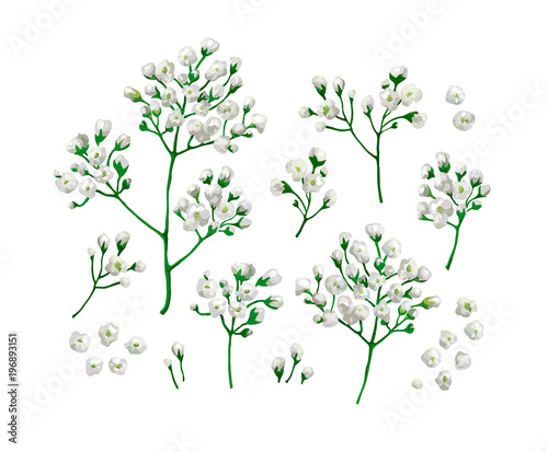 Set collection of gypsophila flowers in watercolor style isolated on set collection of gypsophila flowers in watercolor style isolated on white background mightylinksfo