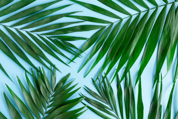Minimal composition with green leaves on a blue pastel background