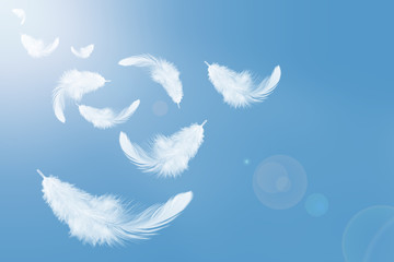Abstract white feathers flying in the sky. Wall mural
