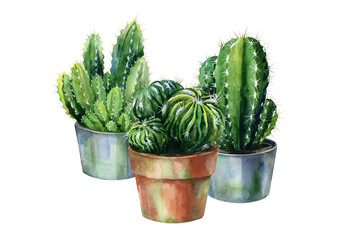 Cacti watercolor isolated on white. Cactus illustration can be used as print, home or garden decoration.