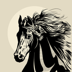 Horse head with a mane. Hand drawn illustration. Hand sketch.