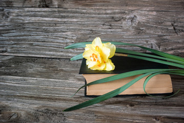 Photo of a beautiful yellow flower lying on a old book on a wooden background