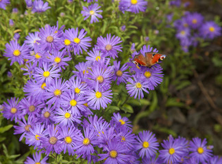 Purple flowers and butterfly