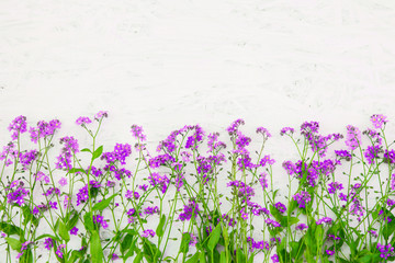 Beautiful Nature Summer Flower background