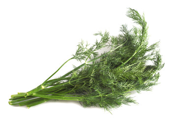 fragrant bunch of green fresh dill