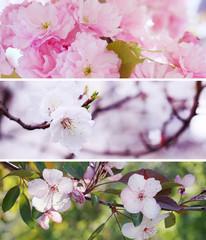 Banner set of pink spring flowers