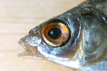Fish head on light background close-up blurred background