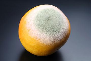 rotting grapefruit on a dark background