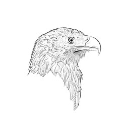 Sketch of looking eagle. Profile. Handmade drawn.