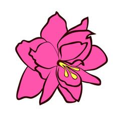 Vector illustration of Amaryllis flower