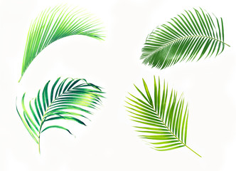Poster Palmier Set of palm leaves isolated on white background.