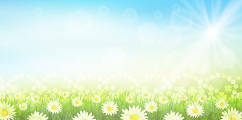 クローバー 葉 緑 背景