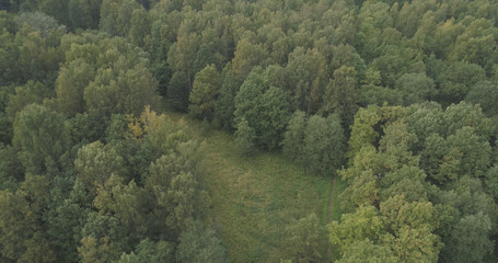 Aerial flying over summer forest on a cloudy day