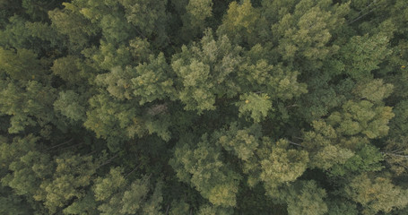 Aerial top view over summer forest on a cloudy day