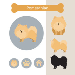Pomeranian Dog Breed Infographic,  Front and Side View, Icon