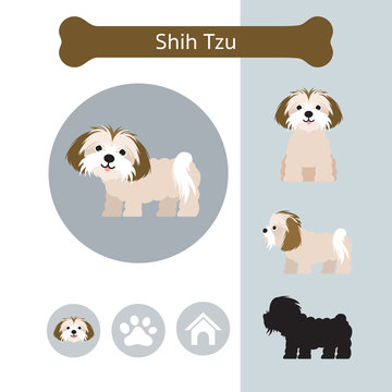 Shih Tzu Dog Breed Infographic,  Front and Side View, Icon
