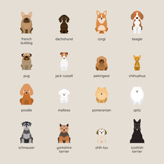 Dog Breeds Set, Small and Medium Size, Front View, Vector Illustration