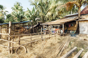 Typical lao farm sorrounded by palm trees