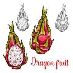 Dragon fruit vector sketch exotic fruits icon