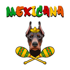 Dobermann with maracas wearing in sombrero. Mexicana.  illustration.
