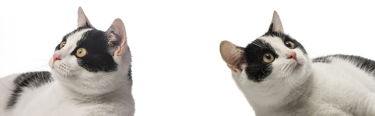 black and white cats close up on white background
