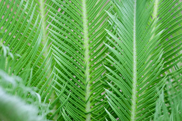 Natural green plants background or wallpaper. nature view of green leaf in garden