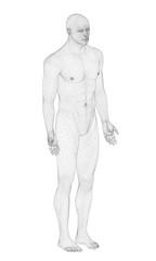 Male model in 3D