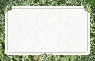 チュラルでエコなイメージのメッセージボード(ベコニアの葉)