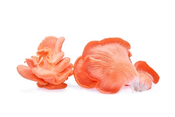 pink oyster mushroom isolated on white background