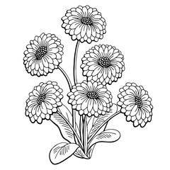Daisy flower graphic black white isolated bouquet sketch illustration vector