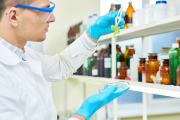 Profile view of concentrated young scientist wearing safety goggles and white coat holding Petri dish in hand while carrying out quality control of lettuce in modern lab.